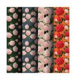 Rose seamless pattern Stock Photo
