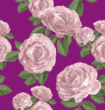 Rose seamless pattern Royalty Free Stock Image