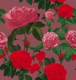 Rose seamless pattern Stock Photos