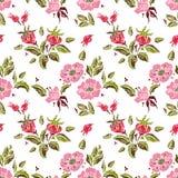 Rose seamless pattern Royalty Free Stock Image