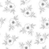 Rose seamless texture Stock Photos