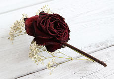 Rose sec et gypsophila Image stock