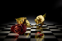 Rose seca imagenes de archivo