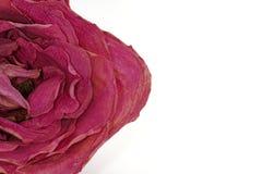 Rose secada Foto de archivo libre de regalías