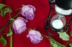 Rose secche Immagini Stock