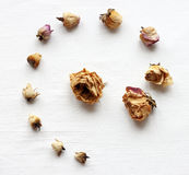 Rose secche su un fondo bianco Fotografie Stock