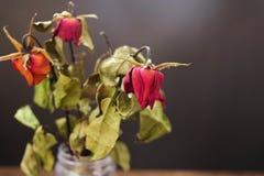 Rose secche in un vaso sulla tavola di legno sui precedenti neri fotografia stock libera da diritti