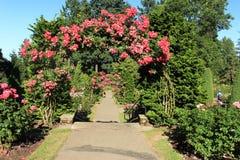 Rose Selections Test Garden Portland Royalty Free Stock Photos