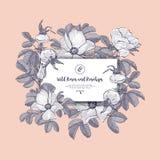 Rose selvatiche e cinorrodi della carta floreale Cinorrodi botanici dei disegni di boho disegnato a mano, rosa canina Invito del  illustrazione vettoriale