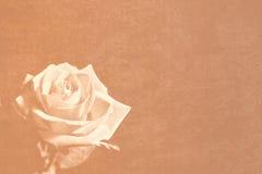 rose sepiowego materiałów Obraz Royalty Free