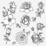Rose set. Flower set. Vintage rose collection with , floral elements, buds and leafs Stock Photography