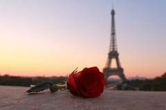Rose seule à l'aube à Paris Photos stock