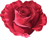 Rose in the shape of heart on Valentine`s day Royalty Free Stock Photo