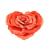 Rose in the shape of a heart Stock Image