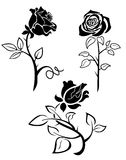 rose silhouette Royaltyfri Fotografi