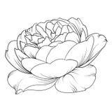 rose silhouette royaltyfri illustrationer