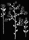 Rose Silhouette. Rose stem in white on black background Stock Photo