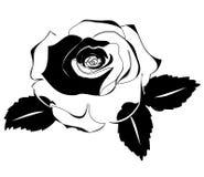 Rose Silhouette Stock Photos