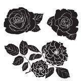 Rose silhouettes Royalty Free Stock Images