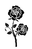 Rose silhuette. Decorative rose flowers and thorns Stock Image