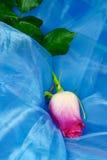 Rose on silk stock photo