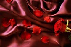 rose silk arkivbild