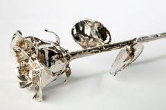rose silver Arkivbild