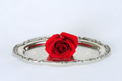 Rose on silver platter. A single red rose on a decorative silver platter.  White background Royalty Free Stock Image