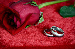 Rose and Silver Wedding Rings Stock Photos