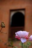 Rose simple Photos libres de droits
