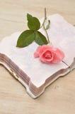 Rose simple de rose dans un carnet ouvert Image stock