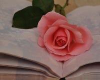 Rose simple de rose dans un carnet ouvert Photographie stock