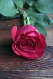Rose simple sur la vieille table en bois rustique Photos stock