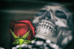 Rose and Skeleton Royalty Free Stock Photo