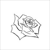 Rose sketch Royalty Free Stock Image