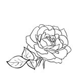 Rose sketch. Royalty Free Stock Photos
