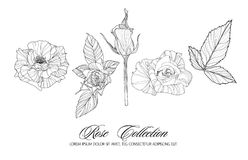 Rose sketch collection. Hand drawn flower set. Highly detailed hand drawn roses. Vector illustration Stock Photos