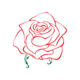 Rose sketch. Flower design element. Vector illustration. Elegant floral outline design. Red symbol isolated on white background. A Royalty Free Stock Photography