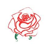 Rose sketch. Flower watercolor design element. Vector illustration. Elegant floral outline design. Red symbol isolated on white ba Stock Photography