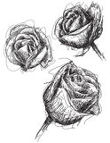 Rose sketches Royalty Free Stock Photo