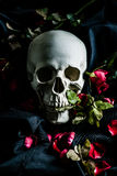 Rose and Skull Stock Photo