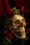 Rose and Skull stock photography