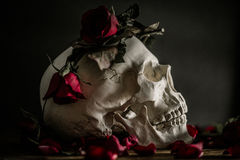 Rose and Skull Royalty Free Stock Image