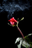 Rose and smoke Stock Photos
