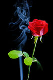 Rose and smoke on black background Stock Photos