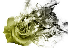 The rose from the smoke Stock Image