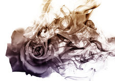The rose  from the smoke. Gradient rose  which becomes smoke Royalty Free Stock Photography
