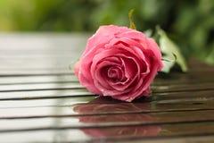 Rose sous la pluie photographie stock