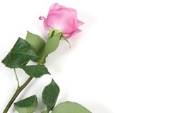 rose space white στοκ εικόνες