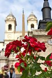 Rose at the Spanish steps in Rome. Red roses at the Spanish steps in Rome, Italy Stock Images